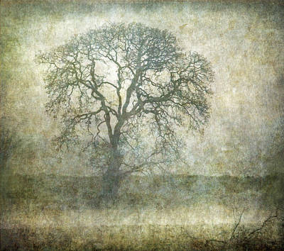 Photograph - Tree by Angie Vogel