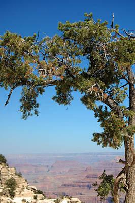 Photograph - Tree Arch by Leticia Latocki