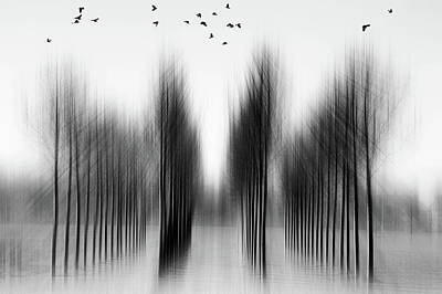 Blur Photograph - Tree Architecture by Roswitha Schleicher-schwarz