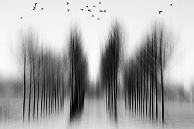 Munich Photograph - Tree Architecture by Roswitha Schleicher-schwarz