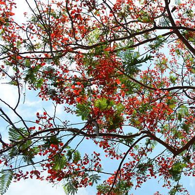 Photograph - Tree Art by Cheryl Miller