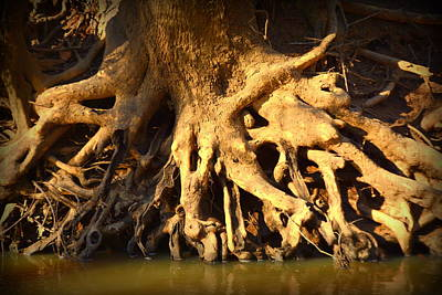 Spiderweb Photograph - Tree Art by Lisa Wooten