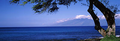 Tree At A Coast, Kapalua, Molokai Art Print by Panoramic Images