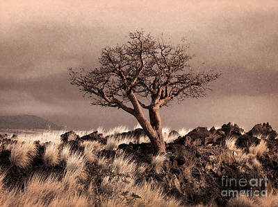 Photograph - Tree At Dusk In Waikoloa by Ellen Cotton