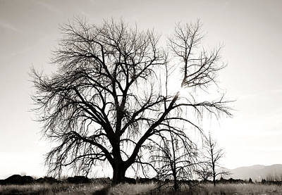 Sihlouette Photograph - Tree At Harpers Lake Louisville 2 by Marilyn Hunt