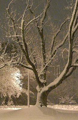 Tree At Night Art Print