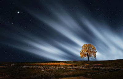 Autumn Scene Photograph - Tree At Night With Stars by Bess Hamiti