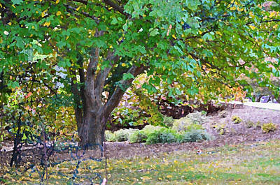 Culture Photograph - Tree At Norfolk Botanical Garden 3 by Lanjee Chee