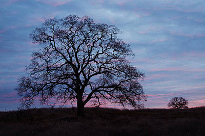 Photograph - Tree At Purple Sunrise by Robert Woodward