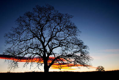 Photograph - Tree At Sunrise by Robert Woodward