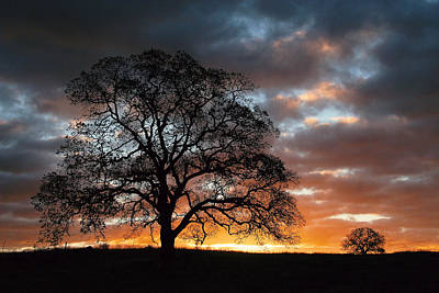 Photograph - Tree At Sunrise With Clouds by Robert Woodward