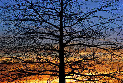 Print featuring the photograph Tree At Sunset by Daniel Woodrum