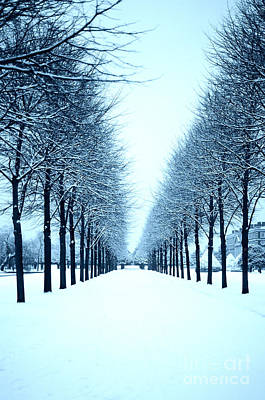 Tree Avenue In Snow Art Print