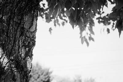 Tree Bark And Leaves Art Print