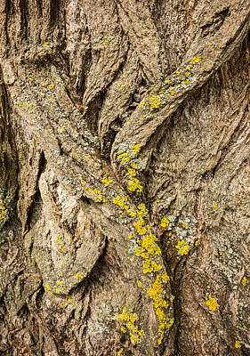 Kids Alphabet - Tree bark closeup - natural abstract by Matthias Hauser