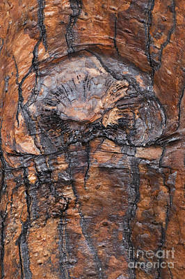 Darwin Research Center Photograph - Tree Bark Design by Bob Phillips