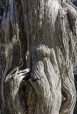 Art Print featuring the photograph Tree Bark No. 3 by Lynn Palmer