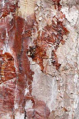 Photograph - Tree Bark by Paul Cowan