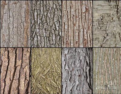 Photograph - Tree Bark by Ronald Grogan