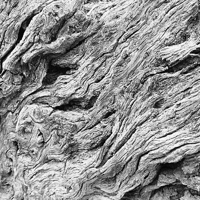 Abstract Landscape Photograph - Tree Bark by Ryan Hoffman