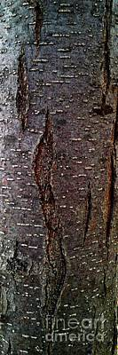 Photograph - Tree Bark To The Left by Jennifer E Doll