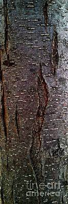 Photograph - Tree Bark To The Right by Jennifer E Doll