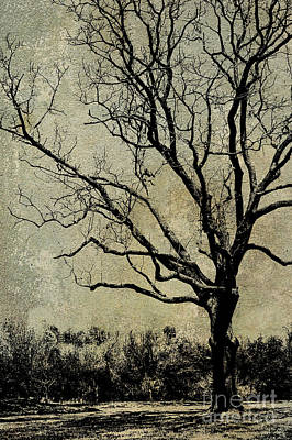 Photograph - Tree Before Spring by Dawn Gari