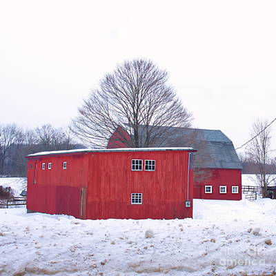 Slushy Photograph - Tree Between The Barns. by Marcel  J Goetz  Sr