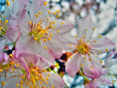 Photograph - Tree Blossom by Nina Ficur Feenan