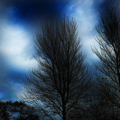 Landscapes Photograph - Tree Blue Night  by Paul Sutcliffe