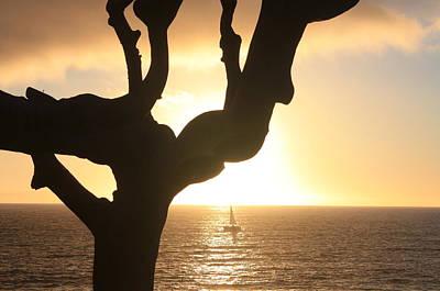 Photograph - Tree Boat Sunset by Daniel Schubarth