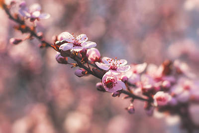 Tree Branch Bloom Art Print by Joshua Minso