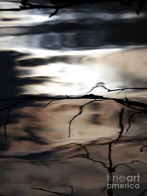 Photograph - Tree Branch Reflection by Jane Ford