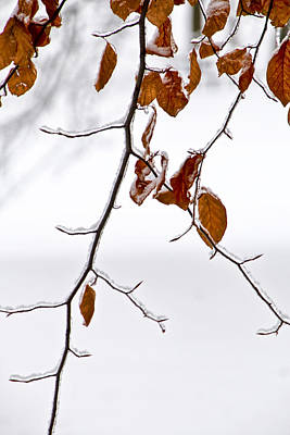 Photograph - Tree Branch With Winter Snowfall In Garfield Park No. 1088 by Randall Nyhof