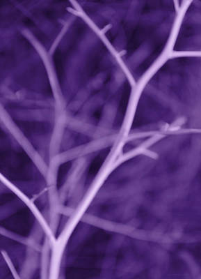 Tree Branches Abstract Purple Art Print by Jennie Marie Schell