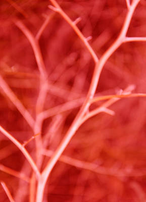 Photograph - Tree Branches Abstract Red by Jennie Marie Schell