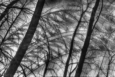 Photograph - Tree Bridge Designs Bw by Mel Steinhauer