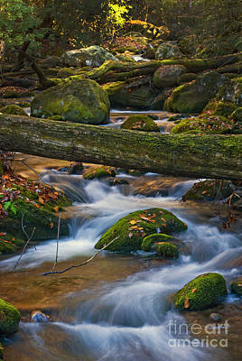 Photograph - Tree Bridge In The Smokies by Paul W Faust -  Impressions of Light