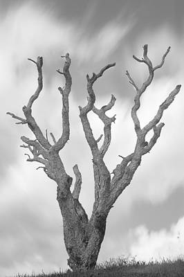 Photograph - Tree by Bruno Rosa