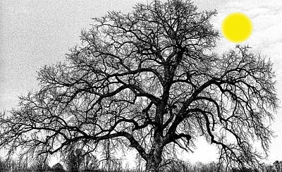 Art Print featuring the photograph Tree By Moon Light by Wanda Brandon