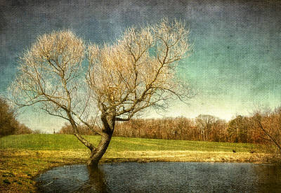 Photograph - Tree By The Pond by Carolyn Derstine