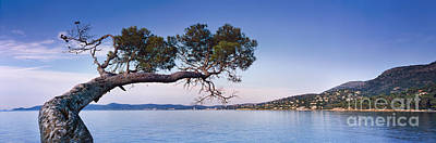 France Provence Photograph - Tree By The Sea - Cote D'azur by Rod McLean