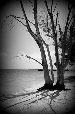 Photograph - Tree By The Sea by Laurie Perry