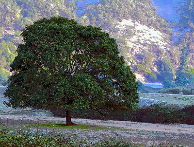Photograph - Tree By The Umpqua by Michele Avanti