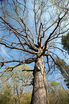 Photograph - Tree by Byron Jorjorian