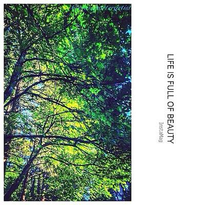 Tree Canopy From My Afternoon Walk Art Print
