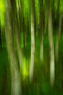 Art Print featuring the photograph Tree Canopy by Serge Skiba