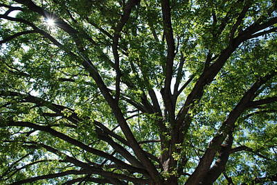 Photograph - Tree Canopy Sunburst by Kenny Glover