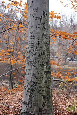 Fantasy Bark Photograph - Tree Carvings by Erin Cadigan