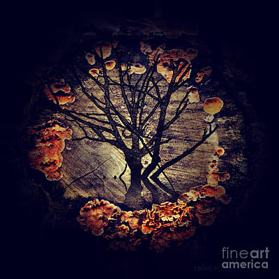 Photograph - Tree Circle 2 by Milliande Demetriou